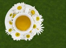 Tè di camomilla di erbe Fotografie Stock