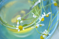 Tè di camomilla di vista superiore con i fiori della camomilla Fotografia Stock
