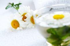 tè di erbe della Camomilla-menta Fotografia Stock