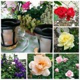 Tè di Rose&Rose Immagini Stock