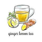 Tè disegnato a mano del limone dello zenzero dell'illustrazione di vettore Fotografia Stock