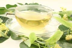 Tè fresco del fiore del linden Fotografie Stock Libere da Diritti