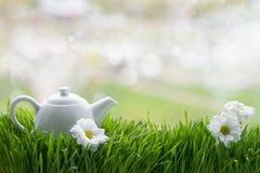 Tè naturale su erba verde Fotografia Stock Libera da Diritti