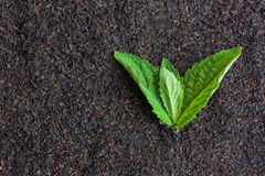 Tè nero con i fogli di menta Fotografia Stock