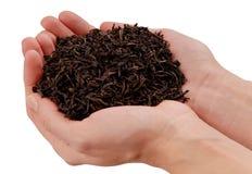 Tè nero in mani, manciata della foglia di tè secco Fotografia Stock Libera da Diritti