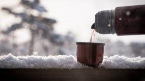 Tè, neve, inverno, palude, termoss rossi immagine stock libera da diritti