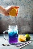 Tè o limonata ghiacciato blu del fiore del pisello di farfalla Bevanda di erbe della disintossicazione sana immagine stock libera da diritti