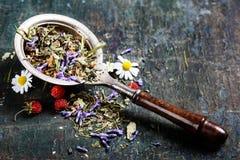 tè selettivo naturopathy di infusione di erbe di vetro del horsetail del fuoco del equisetum della tazza del arvense Immagini Stock Libere da Diritti