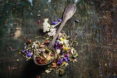 tè selettivo naturopathy di infusione di erbe di vetro del horsetail del fuoco del equisetum della tazza del arvense Immagine Stock