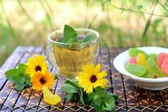 tè selettivo naturopathy di infusione di erbe di vetro del horsetail del fuoco del equisetum della tazza del arvense Fotografia Stock