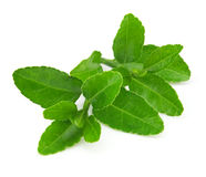 Tè verde Fotografia Stock Libera da Diritti