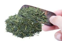 Tè verde Fotografie Stock Libere da Diritti