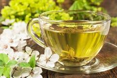 Tè verde con il fiore di ciliegia Fotografia Stock Libera da Diritti
