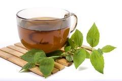 Tè verde con un gelsomino Immagini Stock