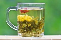 Tè verde esotico in una tazza di vetro Immagini Stock Libere da Diritti