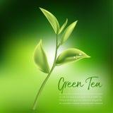 Tè verde, foglia di tè verde Royalty Illustrazione gratis