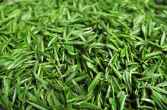Tè verde fresco Fotografia Stock