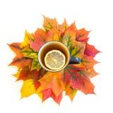 Té caliente con el limón sobre las hojas de otoño en blanco Aislado Fotos de archivo