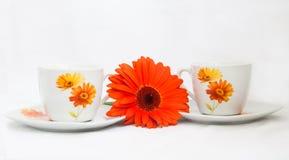 Té con las flores Fotos de archivo libres de regalías