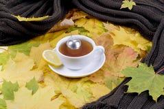 Té del otoño Fotografía de archivo libre de regalías