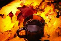Té en leafes brillantes del otoño Imágenes de archivo libres de regalías
