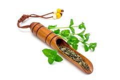 Té herbario seco de la menta en cucharada de madera coreana tradicional del té e hierbabuena fresca en el fondo, aislado, horizon Imagen de archivo