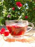 Té natural de los rosa-pétalos en el fondo del arbusto color de rosa fotografía de archivo