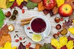 Té que se calienta del otoño Foto de archivo libre de regalías