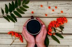 Té, taza, manos, serbal Foto de archivo