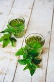 Té verde de la menta Imagen de archivo libre de regalías