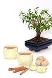 Té y árbol Imágenes de archivo libres de regalías