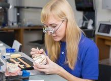 Técnico de laboratório dental que aplica a porcelana ao molde da dentição Fotos de Stock Royalty Free
