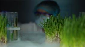 Técnico de laboratorio que compara la planta en el tubo de ensayo y la muestra verde del trigo, experimento almacen de metraje de vídeo
