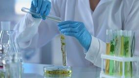 Técnico de laboratorio que vierte el tubo herbario líquido químico, extracto de la perfumería, cosmetología metrajes