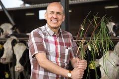 Técnico de sexo masculino maduro con el bieldo en granero del ganado Foto de archivo libre de regalías