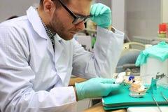 Técnico dental imagen de archivo libre de regalías