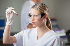 Técnico Testing Blood Sample en revestimiento Foto de archivo