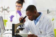 Técnicos que realizan la investigación en laboratorio foto de archivo