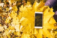 Téléphone dans le feuillage d'automne d'érable Images stock