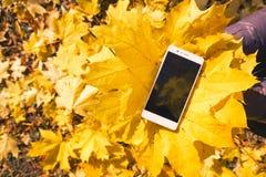 Téléphone dans le feuillage d'automne d'érable Photo libre de droits