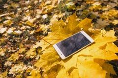 Téléphone dans le feuillage d'automne d'érable Photographie stock libre de droits