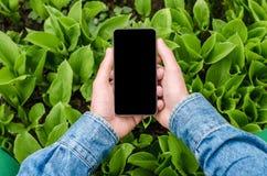 Téléphone portable dans des mains un jeune homme d'affaires de hippie Image libre de droits