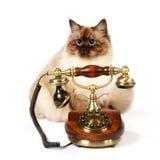 Téléphone sibérien de wirh de chat de point de couleur Images stock