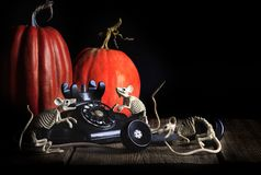 Téléphone squelettique de vintage de souris de Halloween Image stock