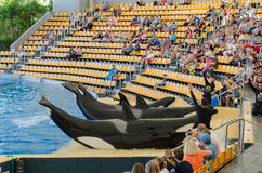 TÉNÉRIFE, ESPAGNE - 19 NOVEMBRE 2015 : Exposition d'océan d'Orcan (parc de Loro Image libre de droits