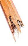 A térmita destruiu a madeira Fotos de Stock