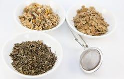 Tés herbarios en pequeños tazones de fuente blancos con el infuser Foto de archivo libre de regalías