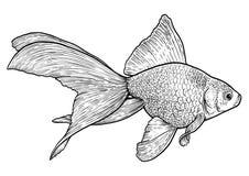 Tétra illustration au néon, dessin, gravure, encre, schéma, illustration de vectorGoldfish, dessin, gravure, encre, schéma, vecte illustration stock