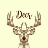 Tête à cornes de cerfs communs de Brown avec l'ornement illustration libre de droits