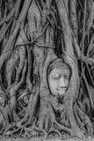 Tête antique de Bouddha dans des racines d'arbre Images libres de droits